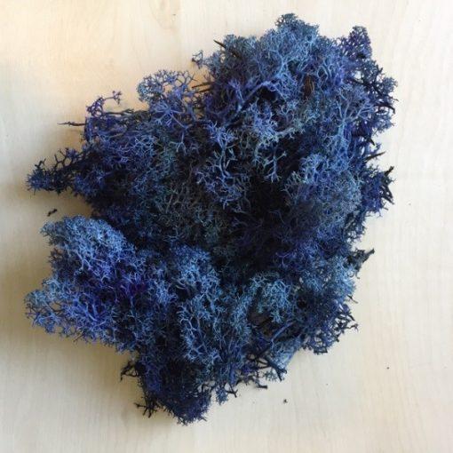 Zuzmó kék