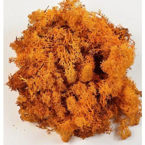 Zuzmó őszies narancssárga