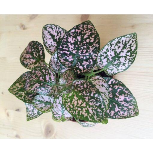 Szeplősarc - rózsaszín