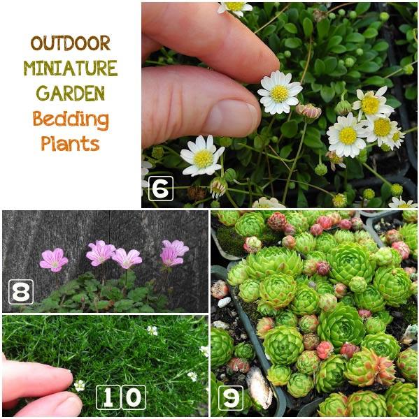 Minikerti növények