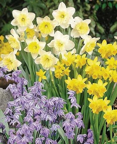 Kora tavaszi hagymások