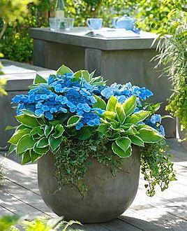 Árnyéktűrő növények konténerbe, teraszra